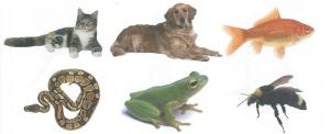 Animal Bingo1 2