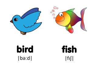 pronun fish_birds