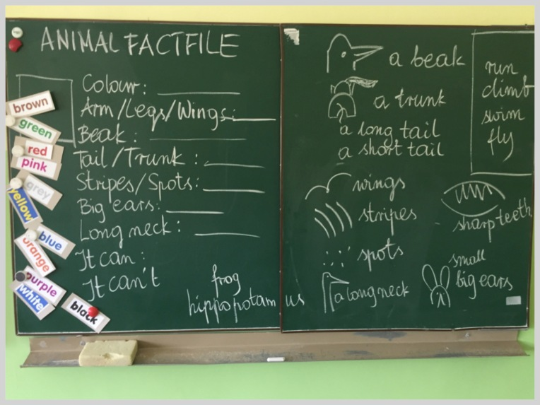 Animal factfile boardwork