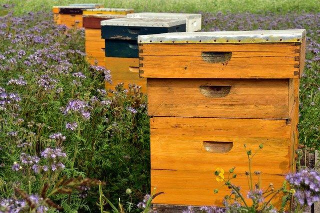beehive-3703426_640